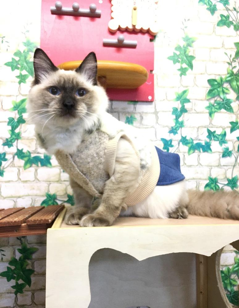 一宮市(愛知県)周辺の猫カフェに関する店舗情報 -  …
