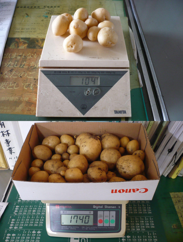 ジャガイモ収穫画像