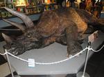 大きい恐竜?