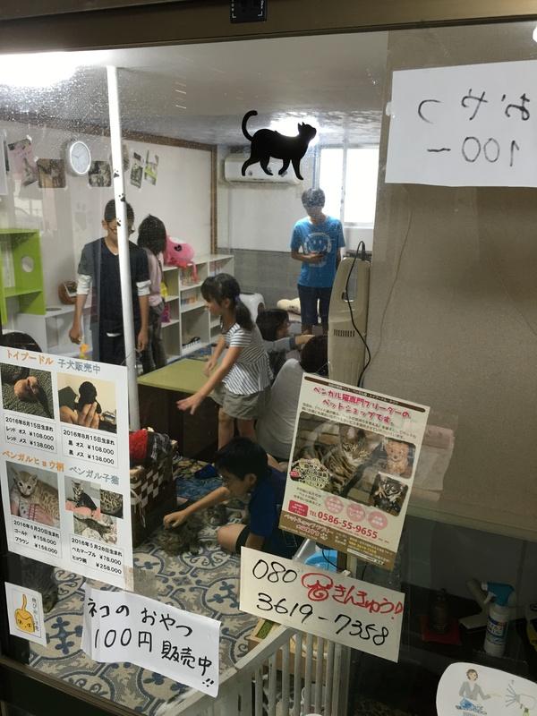 猫カフェなら猫喫茶空陸家 | 猫と過ごすカフェ